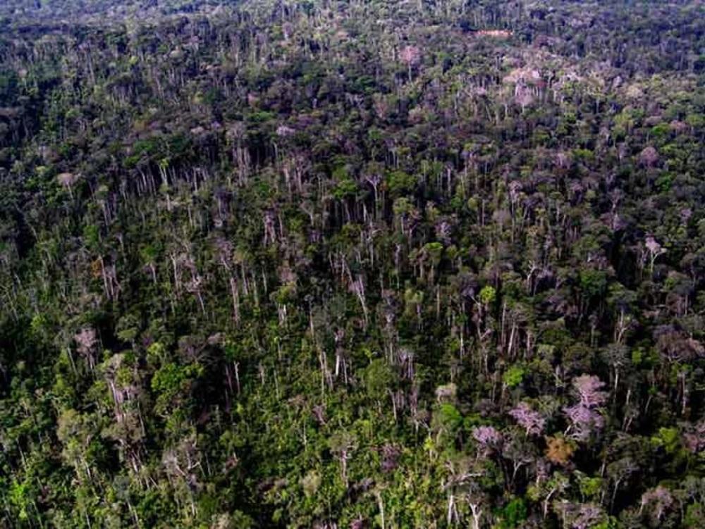 queda árvores na amazônia